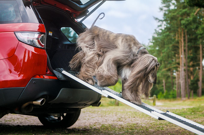 The Pet Access Ramp allows your dog to easily enter and exit the vehicle.